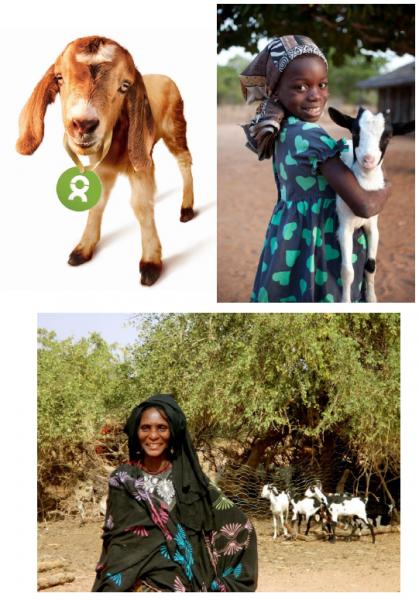 Oxfam Asset Selection