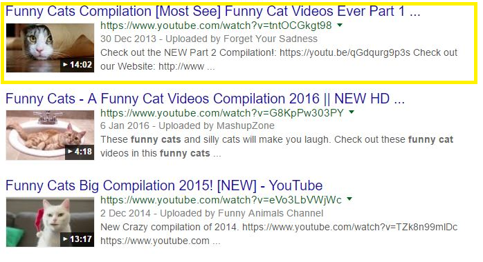 funny cats google results