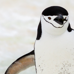 Penguin 4.0: The wait is over, Penguin finally part of core algorithm.