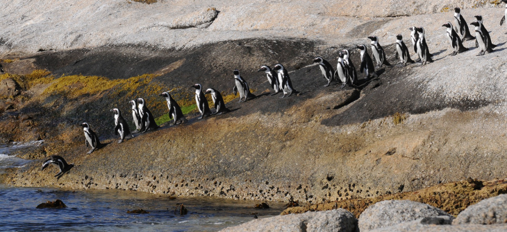 The-march-of-the-Penguin-hero-image